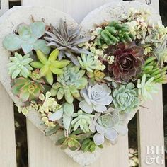 This Valentine's Day decoration showcases the beauty of succulents. Create a concrete heart and fill it with a variety of plants. Hang and enjoy this living decoration for months to come. Succulent Display, Hanging Succulents, Succulent Wall, Hanging Plants, Succulents Garden, Succulent Plants, Colorful Succulents, Succulent Landscaping, Succulent Gardening
