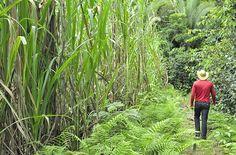 Agrofloresta em larga escala é tema de curso no interior de SP