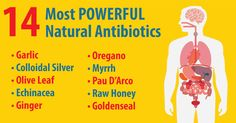 14 of the BEST time-tested natural antibiotics used to kill bacteria and reverse life threatening infections.