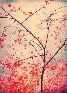 red october - Ingrid Beddoes - Canvas Print