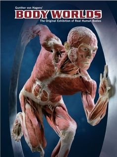 Gunther von Hagens - Body Worlds, the original exhibition of real human bodies. What a miracle our bodies are!!!
