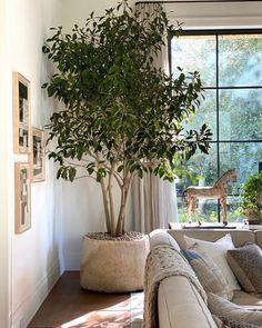 Living Room Designs, Living Room Decor, Living Spaces, Plants For Living Room, House Plants Decor, Plant Decor, Indoor Tree Plants, Indoor Olive Tree, Best Indoor Trees