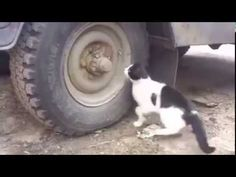 IN Real Life TOM and Jerry Amazing Video Must Watch