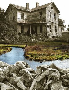 House with stream