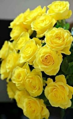 I love yellow roses. Beautiful Rose Flowers, Love Rose, Flowers Nature, Amazing Flowers, Roses Only, Good Morning Flowers, Rose Pictures, Coming Up Roses, Types Of Flowers