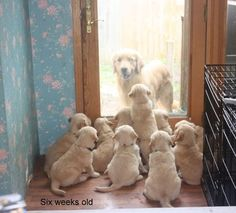 Puppies Locked Mom Out   CuteStuff.co - Cute Animals, Cute Pictures, Cute Videos and MORE!
