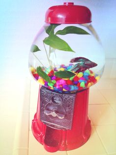 Aquarium gumball machine crafty pinterest gumball for Gumball fish tank