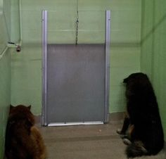 Orlando FL  This was too much. The owner of these dogs died and they are sitting in the corner of the kennel mourning, not moving. Just sitting there. If anyone knows any Chow rescues. PLEASE share. There are 4 Chows there that belonged to the person that died.   Emails  Linda.Hepenstal@ocfl.net  David.Morton@ocfl.net  Debra.Villella@ocfl.net  Orange County Animal Services  Pet Rescue & Adoption Center  2769 Conroy Road  Orlando, FL 32839-2162  Email: AnimalServices@ocfl.net  Phone…