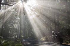 Mist op tijd opstaan Franse Ardennen herfst. Veel mooier wordt het zo'n dag niet. #willemlaros #photography #travelphotography #traveller #canon #canonnederland #fotocursus #fotoreis #travelblog #reizen #reisjournalist #panasonic #compositie #travelwriter #vubreda #fotoworkshop #reisfotografie #landschapsfotografie #cameranu #flickr #fbp #frankrijk #ardennen
