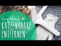 Katzenhaare entfernen von Sofa, Teppich & Co. | Cat Hack #1