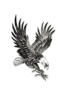 Moolecole Unisex 2 Sheets Creative Body Art Stickers Removable Waterproof Temporary Tattoos Fake Tattoos for Men and Women Eagle >>> Details can be found by clicking on the image. Note:It is Affiliate Link to Amazon.