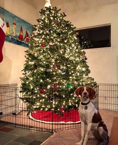 15 Incredible Ways People Protected Christmas Decorations From Their Pets. 15 times people protected their Christmas decorations from their pets