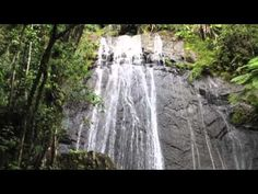 Puerto Rico Waterfall in Rainforest El Yunque #video