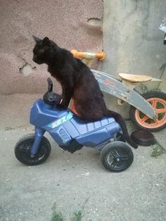 Easy rider:)