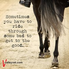 That's what me and Hank are doing right now. Rodeo Quotes, Equine Quotes, Equestrian Quotes, Equestrian Problems, Hunting Quotes, Cowboy Quotes, Senior Quotes, Horse Riding Quotes, Horse Love Quotes