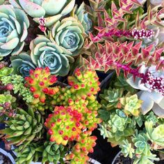 beezees:  #oakland #plants #succulents #
