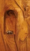 The 'Sleeper' Bed detail of carved alcove.