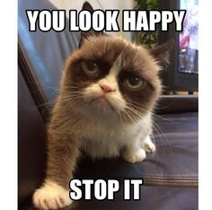 Vee~, give me-a a hug grumpy cat! *cuddles with grumpy cat* Grumpy Cat Quotes, Funny Grumpy Cat Memes, Funny Animal Memes, Funny Animal Pictures, Funny Cats, Funny Animals, Cute Animals, Grump Cat, Dog Cat