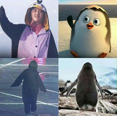 The only proof I need thay Kyungsoo is in fact a penguin