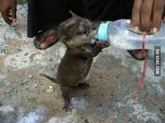 Baby Otter Drinking Milk from the Bottle