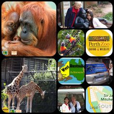 Perth Zoo - WA Achievers How To Use Hashtags, Walking Map, Rock Legends, Slums, Heritage Site, Western Australia, Car Parking, Perth, Kids And Parenting