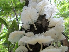 The world of nature Growing Mushrooms, Wild Mushrooms, Stuffed Mushrooms, Mushroom Art, Mushroom Fungi, Mushroom Hunting, Mushroom Pictures, Plant Fungus, Amazing Nature