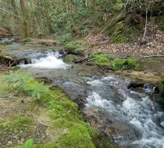 ...along a creek... Kentucky Hiking, Daniel Boone National Forest, Red River Gorge, Natural Wonders, Small Towns, Natural Beauty, Most Beautiful, Trail, Waterfall