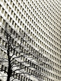 A)selkeä rytmi Urban Nature by David Foster Nass, via Flickr Beautiful image, love the stark relationship between man made and nature as well as the repeat geometric pattern the building creates.