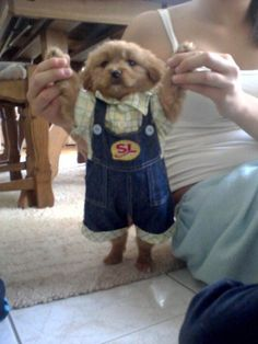 This gentleman all dressed up in his nice overalls >>> shut the front door that's cute