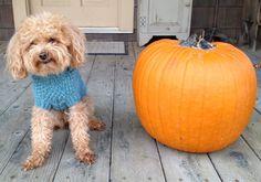 New Fisherman Dog Sweater size M by Charliecloset on Etsy, $75.00