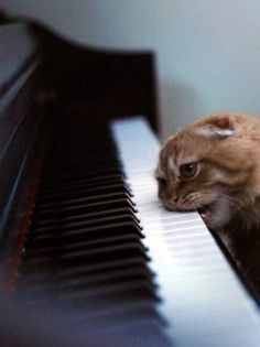 cat tries to eat piano ... piano is not amused...Would this be a c flat?? lolol