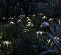 Magical light installation Fireflies by Bruce Munro