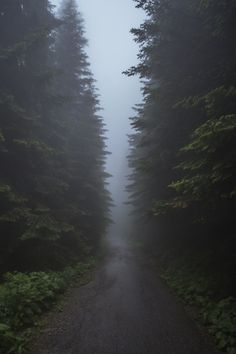 Superb Nature - Alone by Chavdar Blagoev Dark Photography, Landscape Photography, Rainy Wallpaper, Slytherin Aesthetic, Dark Forest, Science And Nature, Aesthetic Pictures, Aesthetic Wallpapers, Mother Nature