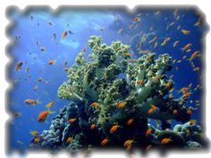 Cahuita's coral reef, the largest and most beautiful in Costa Rica.