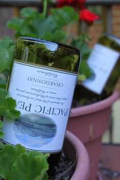 Just fill a wine bottle with water and quickly flip and insert into potted plant: instant self watering that lasts 2days to a week.