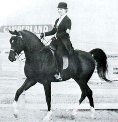 Cass Ole  Al-Marah Cassanova x La Bahia  Arabian, Stallion  Born 1969  This horse played The Black in the movie The Black Stallion