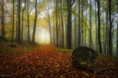golden October forest (Germany) by Alexander Lauterbach
