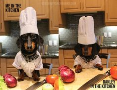 Photo from Crusoe's 2015 calendar: http://www.celebritydachshund.com/store/#!/Crusoe-2015-Calendar-(Pre-Order)/p/28280180/category=0
