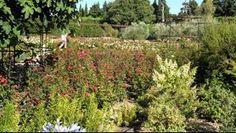 Jardin d'Alcinoos : l'odyssée aux 3000 rosiers