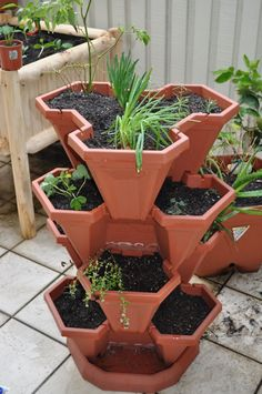Growing vegetables in a courtyard - the wood flower patch - Claire K Creations