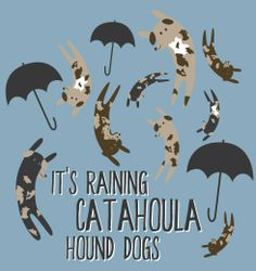 In the rest of the country, it's raining cats and dogs. In Louisiana, it's raining Catahoula Hound Dogs! Perfect for both adults and kids, everyone will love this shirt! $0.00
