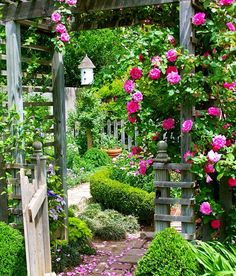 Fuscia climbing rose on wooden arbor with box hedge and brick path in rustic formal English county style garden..