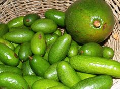 TROPICAL TASTE - Hilo Farmers Market at... | Gather (fingerling seedless avocado)