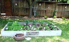 raised box gardening