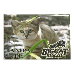 Magnet - Laminated Photo Sand Cat