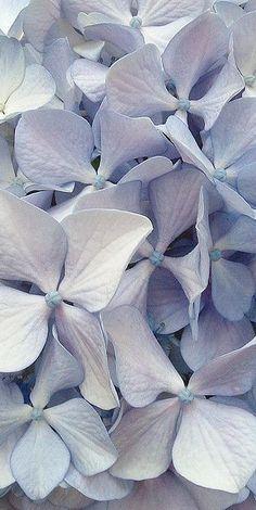 blue                                                                                                                                                                                 Mais