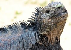 The Animals of the Galapagos Islands