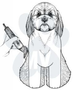 dog care,dog grooming tips,dog ideas,dog nail trimming,dog ear cleaner Dog Grooming Styles, Grooming Shop, Dog Grooming Tips, Poodle Grooming, Dog Grooming Business, Pet Tips, Shih Tzu, Creative Grooming, Puppy Cut