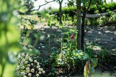 Mohn Gardening, Fruit, Plants, Blog, Potting Soil, Fruit Garden, Seeds, Lawn And Garden, Flora