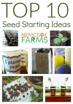 Top Ten Seed Starting Ideas for gardening with your family.  A fun way to get the kids learning about how to grow plants.